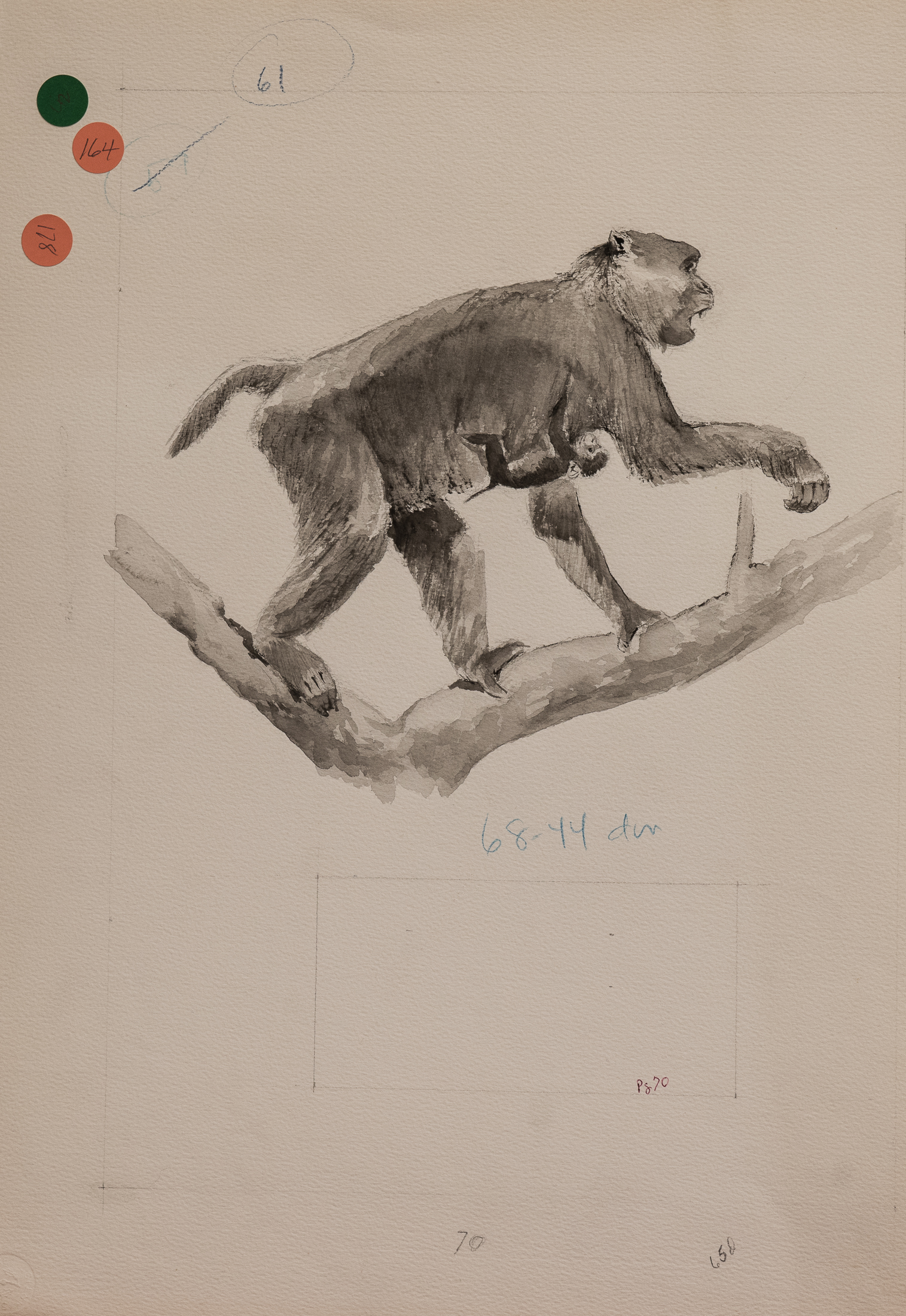 gibbon? (1 of 1)
