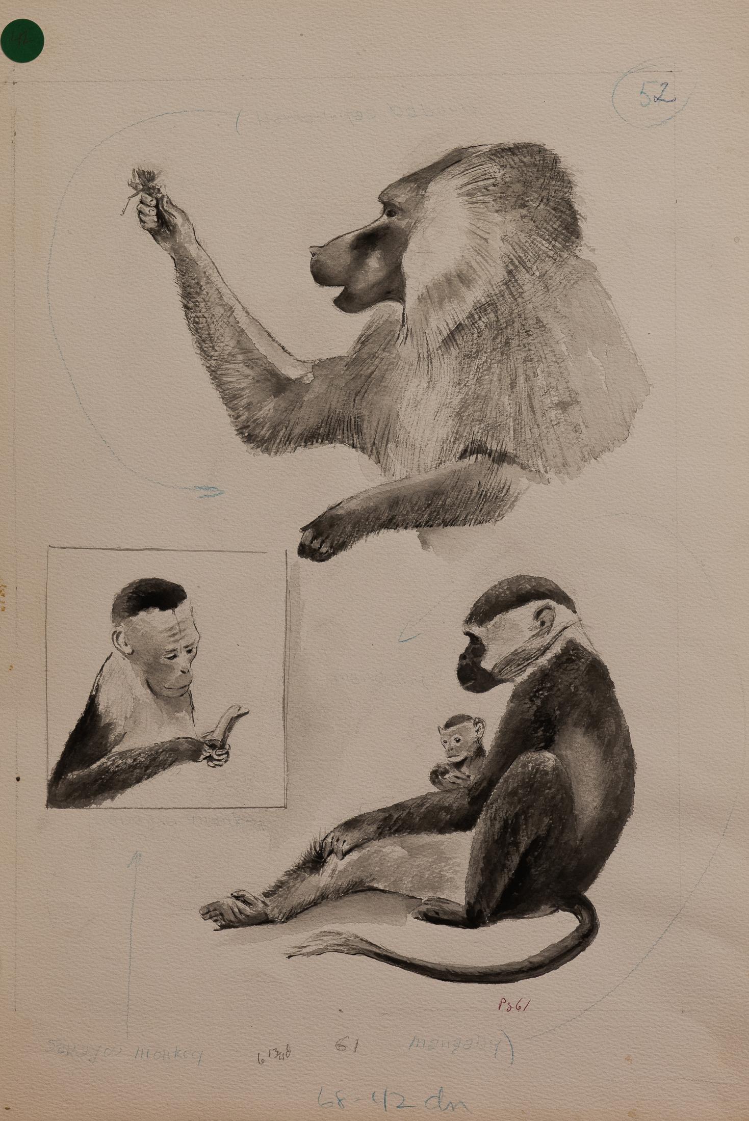 monkey (1 of 1)