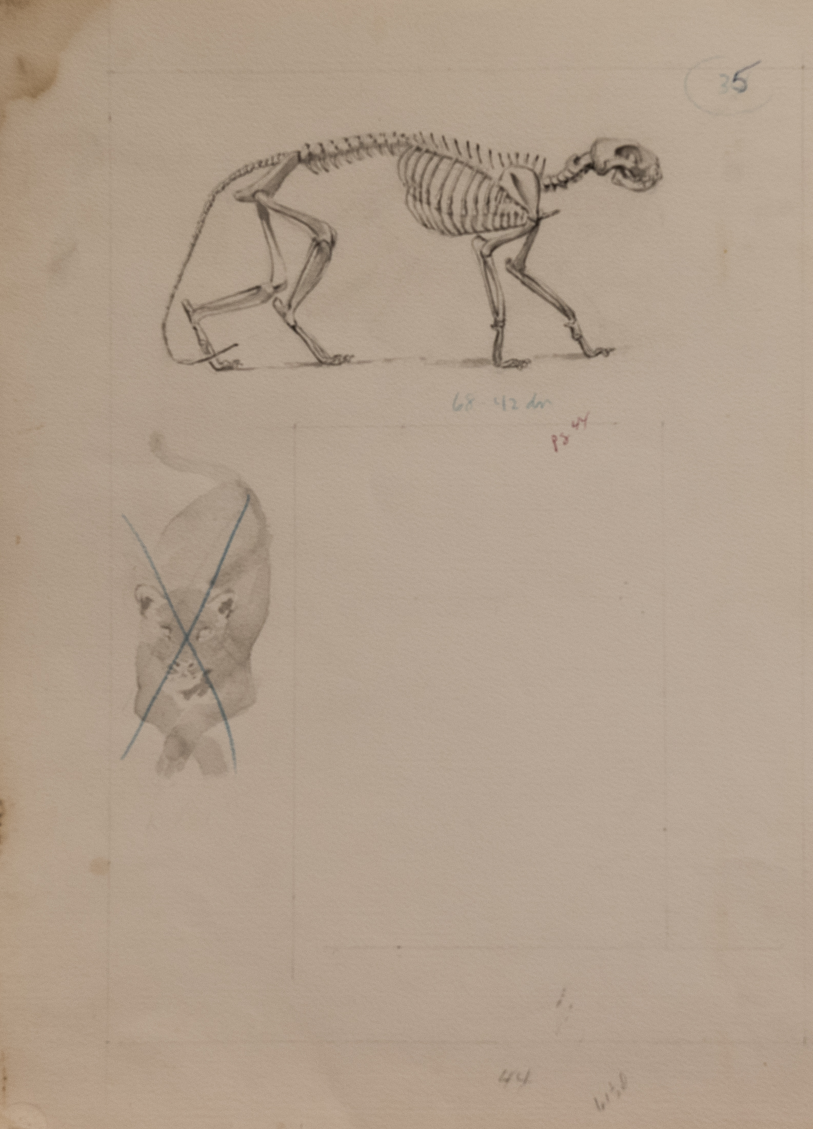 skeletal study (1 of 1)