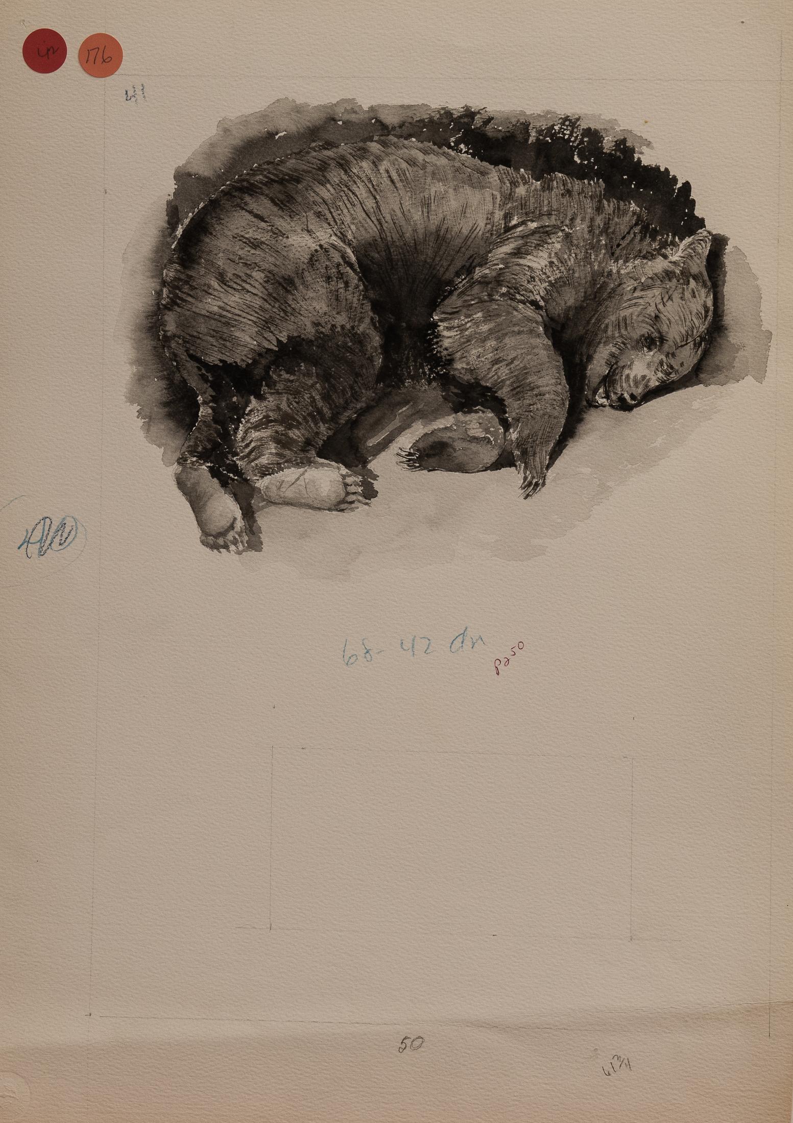 bear (1 of 1)