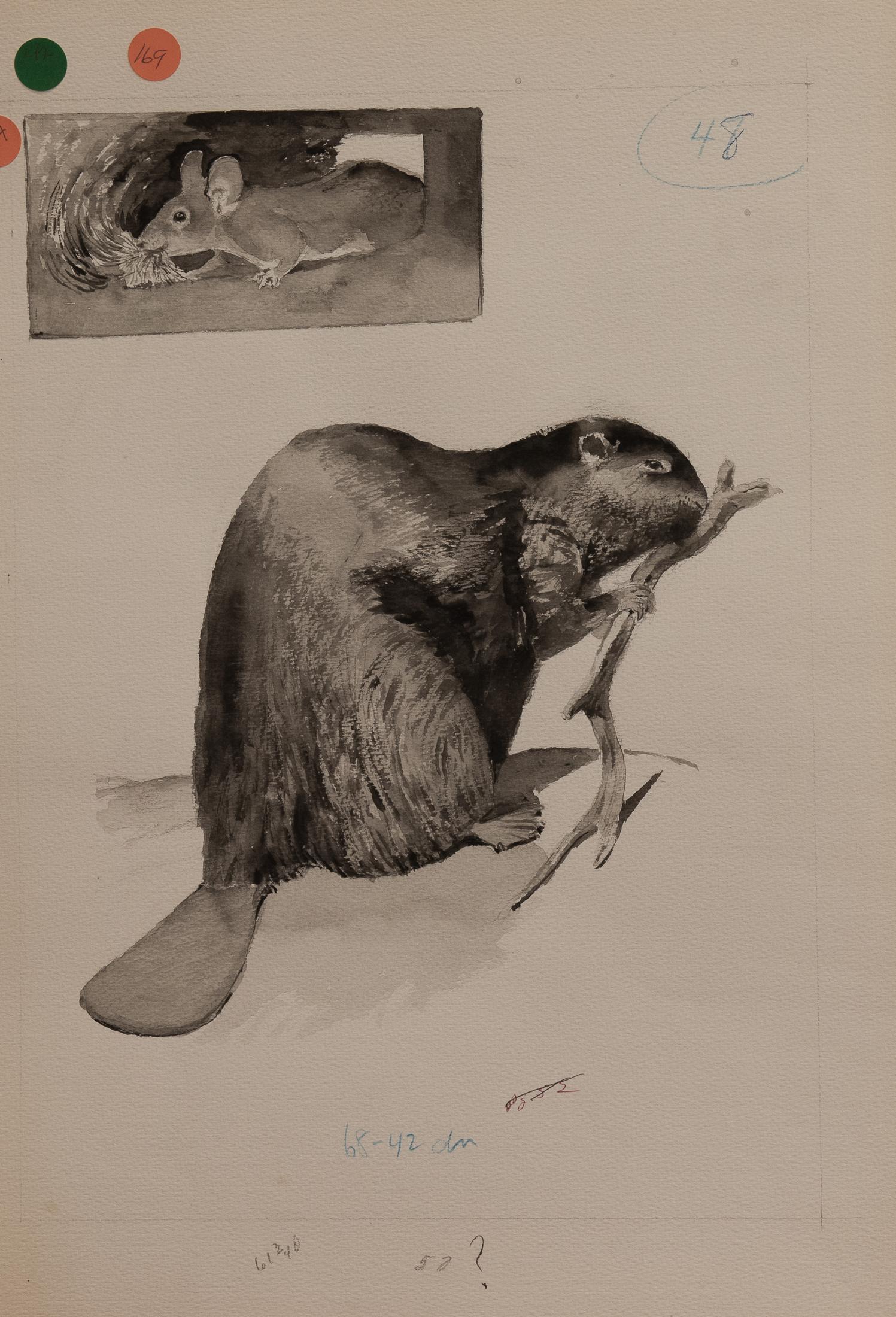 beaver (1 of 1)