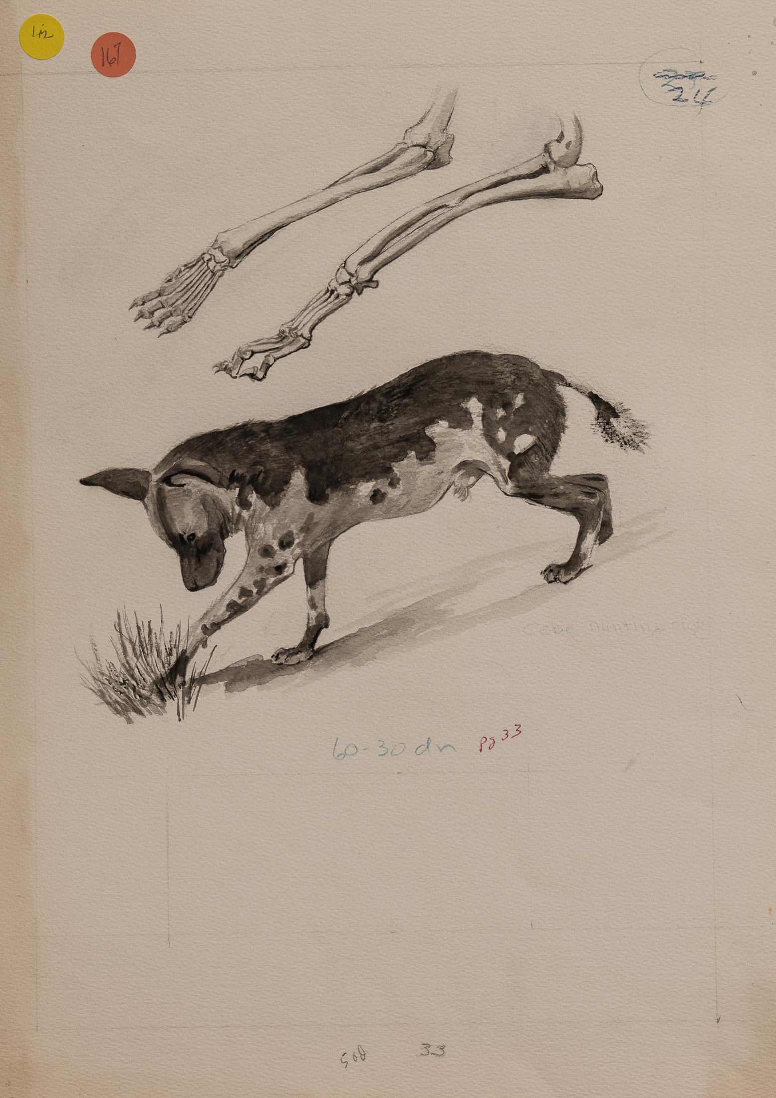 hunting dog (1 of 1)