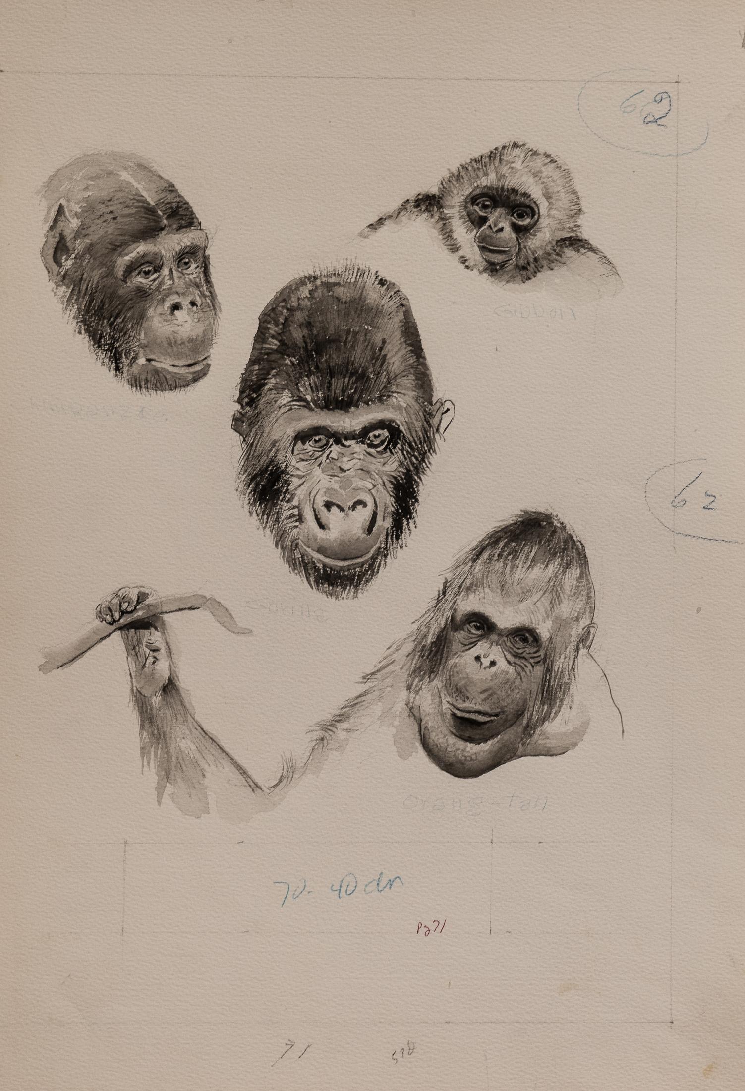 orangutan (1 of 1)