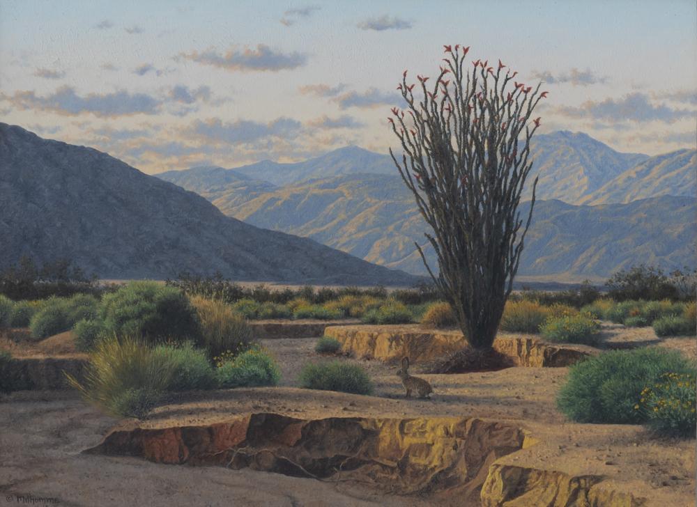 an ocotillo blooming in the anza borrego desert
